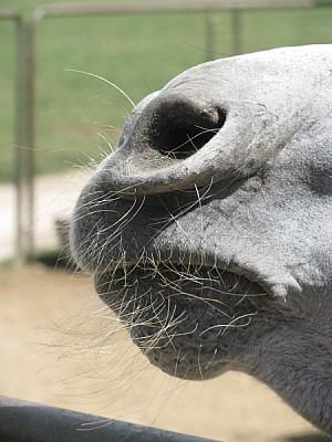 animal,animales,fauna,burro,primer plano,vista de