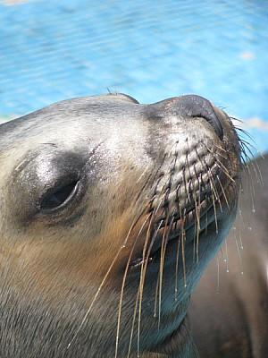 animal,animales,fauna,marina,marino,foca,dia,argen