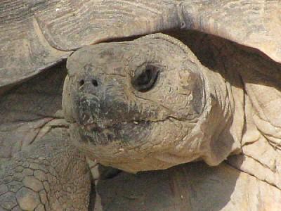 imágenes gratis animal,animales,fauna,tortuga,caparazon,vista de f
