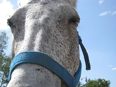imágenes gratis animal,animales,granja,caballo,cabeza,vista de fre