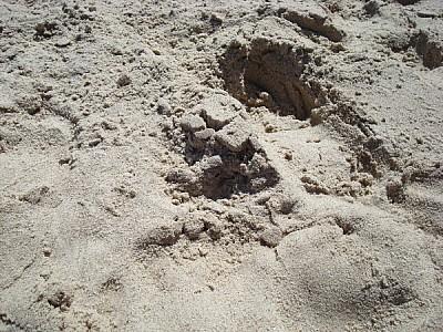 imágenes gratis arena,fondo,background,vista de arrib,playa,verano