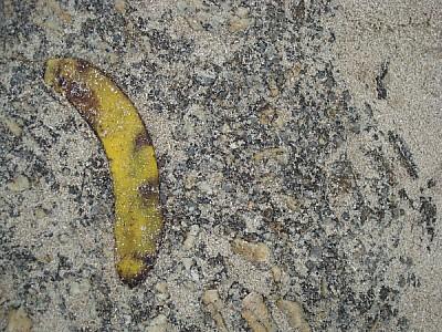 imágenes gratis banana,cascara,fruta,basura,residuo,residuos,biode