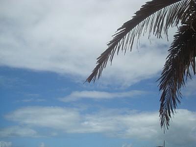 imágenes gratis cielo,palmera,vista de frente,playa,verano,vacacio
