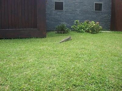 animal,animales,salvaje,salvajes,exterior,iguana,r