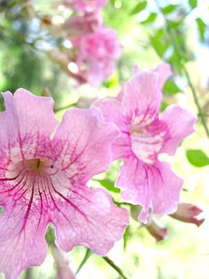 imágenes gratis flor,flores,naturaleza,vista de frente,petalo,peta