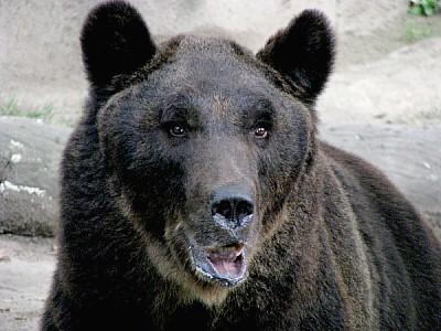 animal,animales,salvaje,oso,osos,pelo,pelajve,zool