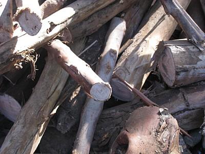 imágenes gratis madera,leño,leños,cortada,cortado,pila,vista de fr