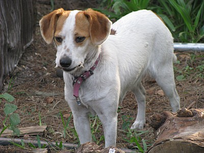 imágenes gratis animal,animales,perro,mascota,mascostas,jardin,ext