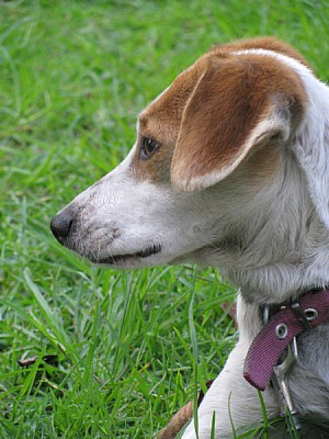 animal,animales,perro,mascota,mascostas,jardin,ext