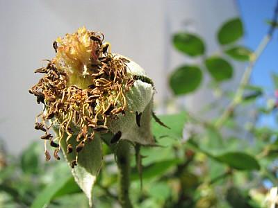 flor,flores,planta,plantas,seco,seca,invierno,muer