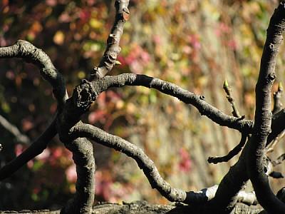 naturaleza,rama,ramas,planta,plantas,fondo,backgro