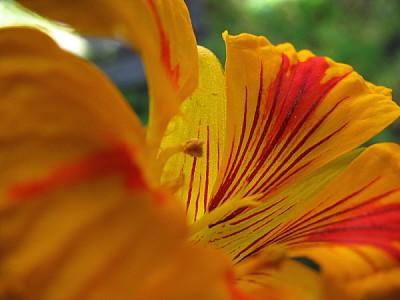 imágenes gratis flor,flores,primer plano,flora,planta,petalo,petal