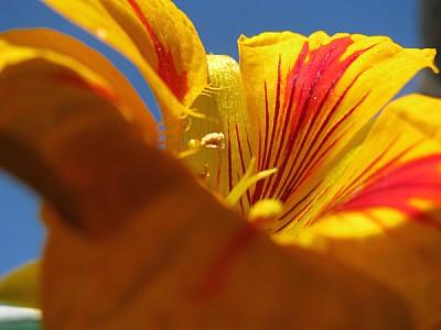 flor,flores,primer plano,flora,planta,petalo,petal