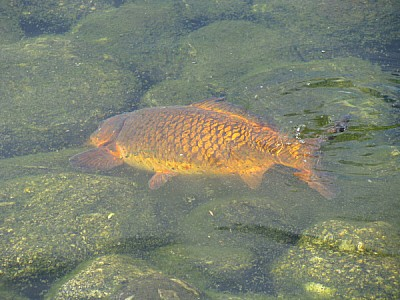 imágenes gratis prod06,aire libre,exterior,rio,agua,pez,peces,natu