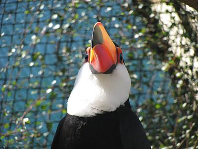 imágenes gratis prod06,América Central,Animal,Animal salvaje,Anima