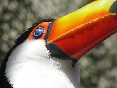 prod06,América Central,Animal,Animal salvaje,Anima