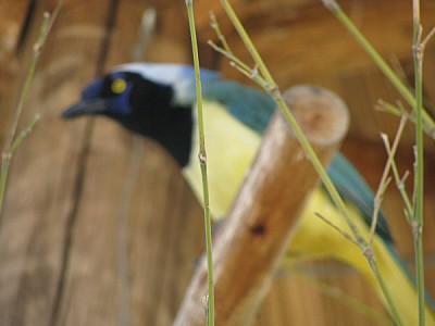 imágenes gratis prod06,animal,animales,pajaro,pajaros,ave,aves,col