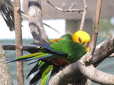 imágenes gratis prod06,ave,aves,pajaro,pajaros,animal,animales,lor