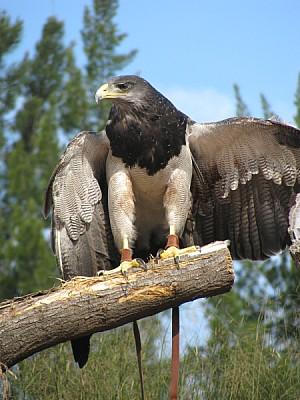imágenes gratis prod06,ave,aves,pajaro,pajaros,animal,animales,pic