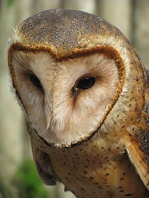 prod06,ave,aves,pajaro,pajaros,animal,animales,pic