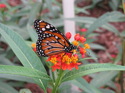 imágenes gratis prod06,insecto,insectos,mariposa,mariposas,color,c