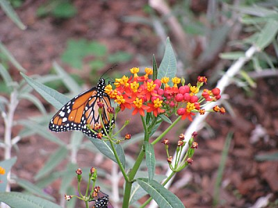 prod06,insecto,insectos,mariposa,mariposas,color,c