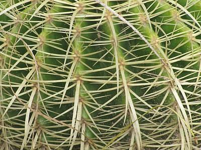 imágenes gratis prod06,planta,plantas,naturaleza,cactus,cacto,pinc
