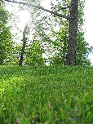 imágenes gratis prod06,aire libre,dia,exterior,verde,bosque,nadie,