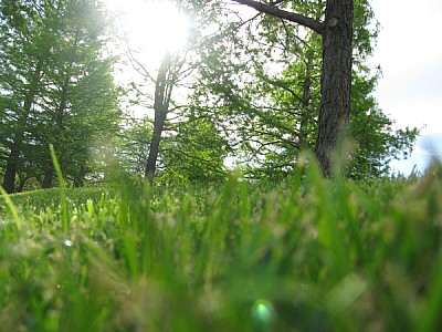 prod06,aire libre,dia,exterior,verde,bosque,nadie,