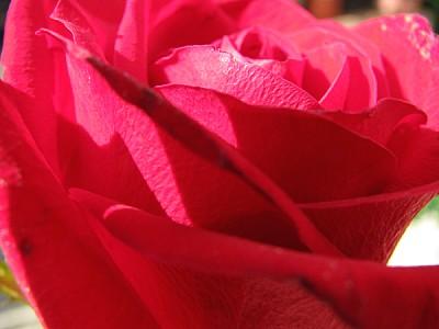 imágenes gratis prod06,Aroma,Aromas,Botánica,Color,Detalle,Detalle
