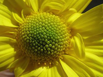 prod06,flor,flores,naturaleza,vista de frente,prim