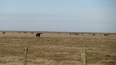 imágenes gratis prod06,campo,escena rural,vista de frente,nadie,an