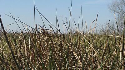 imágenes gratis prod06,argentina,entre rios,campo,escena rural,pai