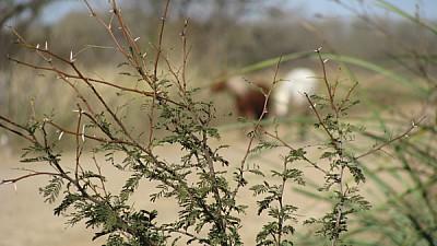 imágenes gratis prod06,argentina,entre rios,campo,escena rural,ani