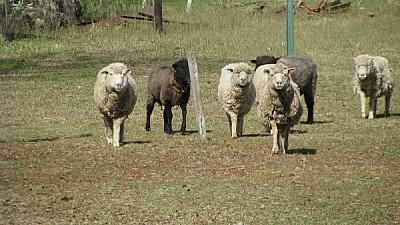 prod06,Agrícola,Agricultura,Animal,Animales,Cabell