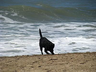 imágenes gratis prod06,animal,animales,perro,perros,negro,vista de