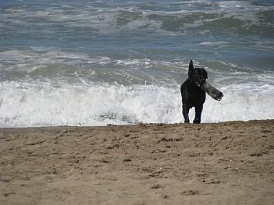 prod06,animal,animales,perro,perros,negro,vista de