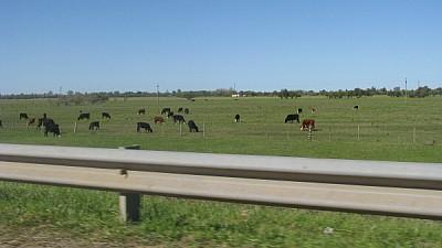 prod06,campo,escena rural,vaca,vacas,animal,animal