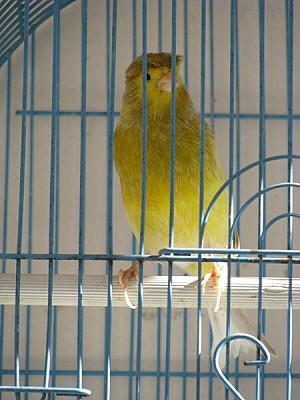 prod06,animal,animales,ave,aves,pajaro,pajaros,can