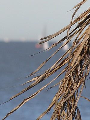 imágenes gratis prod06,otoño,argentina,costa,velero,veleros,palmer