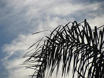imágenes gratis prod06,aire libre,dia,exterior,palmera,palmeras,at