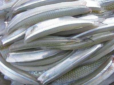 imágenes gratis prod06,comida,comidas,filet,carne,pejerrey,pescado