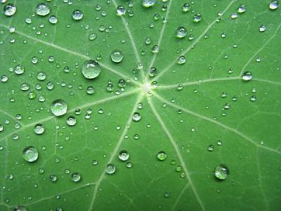 Gotas de Agua en Hoja de Planta