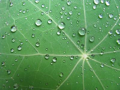 Hoja Verde con Gotas de LLuvia