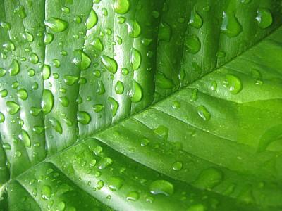 prod06,hoja,hojas,verde,naturaleza,agua,gota,gotas