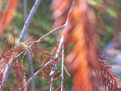 imágenes gratis prod06,fondo,background,naturaleza,nadie,otoño,sec
