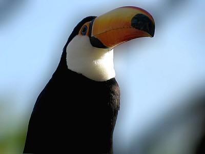 imágenes gratis prod06,ave,aves,pajaro,pajaros,animal,animales,tuc