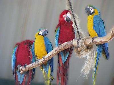 imágenes gratis prod06,ave,aves,pajaro,pajaros,animal,animales,vis