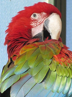 prod06,ave,aves,pajaro,pajaros,animal,animales,vis