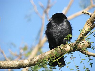 imágenes gratis prod06,animal,animales,ave,aves,pajaro,pajaros,lib